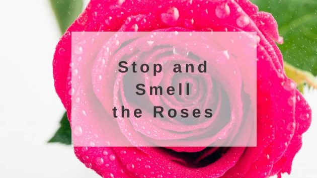 benefits of rose fragrance
